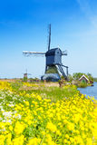 Kinderdijk watermill over spring yellow flowers Royalty Free Stock Photography