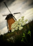 Kinderdijk windmill. With a flower Stock Photo