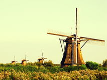 Kinderdijk Windmills Scenery Royalty Free Stock Photo