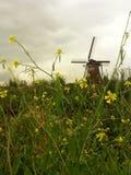 Kinderdjik. World Heritage Windmill and flower stock photography