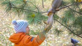 Kindereichhörnchen, das von der Hand im Park einzieht Lizenzfreie Stockbilder
