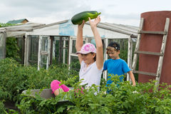 Kinderen in de tuinkruiwagen in openlucht stock foto