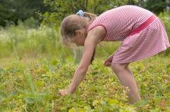Kinderen die aardbeien plukken Stock Afbeelding