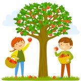 Kinderen die appelen plukken Royalty-vrije Stock Fotografie