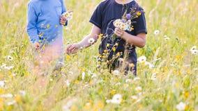 Kinderen die bloemen op een weide plukken stock afbeelding