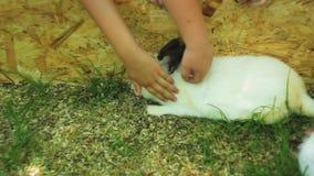 Kinderen die konijn strijken en met het in een gazon spelen Vriendschap tussen kinderen en huisdieren stock footage