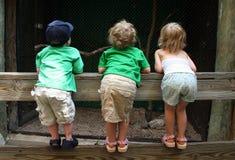 Kinderen die over een Omheining kijken stock foto's