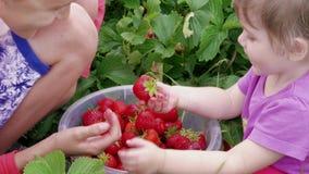 Kinderen die pret met rode aardbei in emmer, siblings hebben stock videobeelden