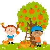 Kinderen die sinaasappelen plukken royalty-vrije illustratie