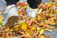 Kinderen` s voeten op gele bladeren Stock Foto's