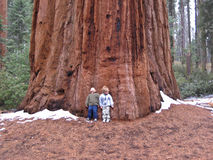 Kinderen tegen de Boom van de Sequoia Stock Fotografie
