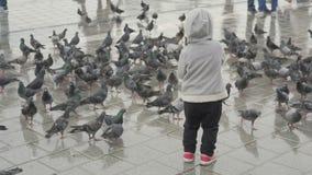 Kinderernährungstauben, Fütterungsvögel des Babys auf Stadtplatz stock video