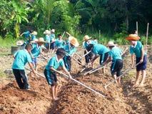 Kindergrabung für die Landwirtschaft Stockbild