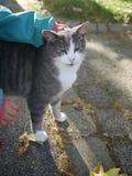 Kinderhandkatzenliebkosung Stockbild