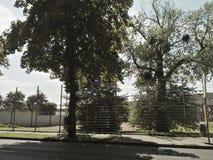 Kinderjarenbomen Royalty-vrije Stock Foto