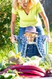 Kinderjunge mit Mutter im inländischen Garten Entzückendes Kind, das nahe der Schubkarre mit gesundem organischem der Ernte steht Stockfotografie