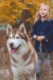 Kindermädchen geht mit nettem heiserem Hund Stockbild