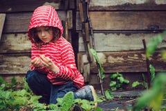 Kindermädchen im gestreiften Regenmantel, der frische organische Erdbeeren im regnerischen Sommer auswählt, arbeiten im Garten Stockfoto