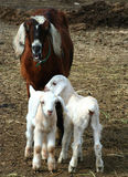 Kindermeisje en Jonge geitjes Royalty-vrije Stock Afbeelding