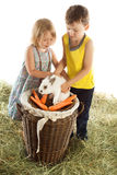 Kinderspiel mit einem Kaninchen Stockfoto