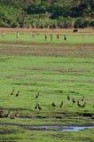 Kinderspielfußball auf einem grünen Feld in Ankarafantsika, Madagas Lizenzfreie Stockbilder