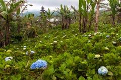 Kindertagesstättenfeld mit blühenden Rosa-, Purpurroten und Blauenhortensien lizenzfreie stockbilder