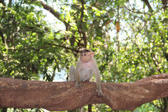 Kinderwilder Affe, Indien, für Touristen Lizenzfreies Stockbild