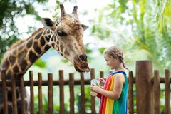 Kinderzufuhrgiraffe am Zoo Kinder am Safari-Park lizenzfreies stockfoto