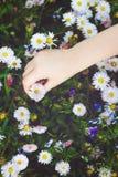 Kindhand die een witte bloem, gestemde foto houden Royalty-vrije Stock Afbeeldingen