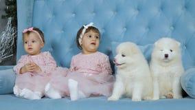 Kindheit, nette Zwillinge mit Bögen auf Kopf sitzt neben zwei weißen flaumigen Welpen auf Sofa stock footage