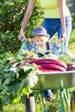 Kindjongen en moeder in binnenlandse tuin Aanbiddelijk jong geitje die zich dichtbij de kruiwagen met oogst Gezonde organisch bev Stock Foto