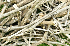 Kindling Stock Images