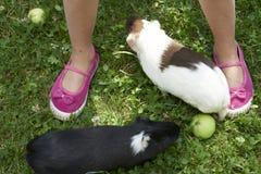 Kindmeisje die en met haar proefkonijnen buiten op groen grasgazon ontspannen spelen royalty-vrije stock foto