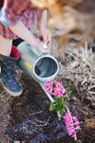 Kindmeisje die in plaidkleding roze hyacintbloemen in de lentetuin water geven stock foto's