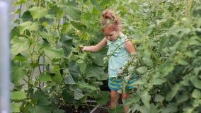 Kindmeisje in een serre met komkommers en tomaten stock videobeelden