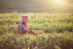 Kindmeisje stammen royalty-vrije stock fotografie