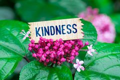 Kindness in wooden card. Kindness word in broken wooden card on beautiful flower at the rain stock photo