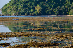 Kinds walking on the low tide el nido palawan. Philippines Royalty Free Stock Image