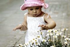 Kindsammelnblumen Stockfotos