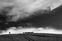 Kine on horizon. With nice Cloudscape - monochrome fine art Royalty Free Stock Image
