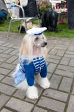 Kines krönad hund royaltyfria bilder