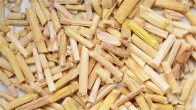 Kinesisk örtmedicin av Imperatae Rhizoma eller den Lalang gräsrhizomen stock video