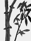 Kinesisk bambuväxt - hand dragen färgpulverteckning Royaltyfri Bild