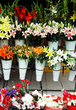kinesisk blomma Royaltyfri Foto