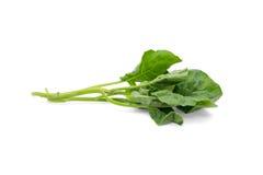 Kinesisk broccoli på vit bakgrund Fotografering för Bildbyråer