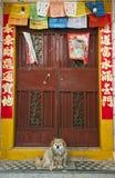 kinesisk coupletshundframdel Arkivfoto