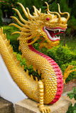 Kinesisk drake - tempel Thailand Fotografering för Bildbyråer
