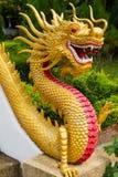 Kinesisk drake - tempel Thailand Royaltyfri Foto