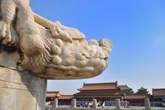 kinesisk drakeloong Arkivbild