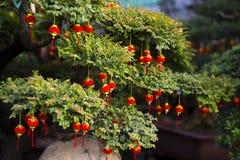 kinesisk festivalfjäder Träd- och kineslyktor Royaltyfria Bilder